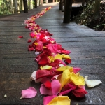 rose petal trail secrets on the lake